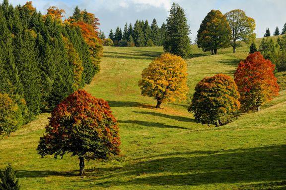 Resultado de imagen para arboricultura
